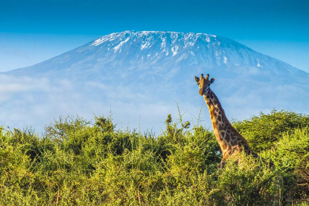 Tanzania KLM Retourtickets