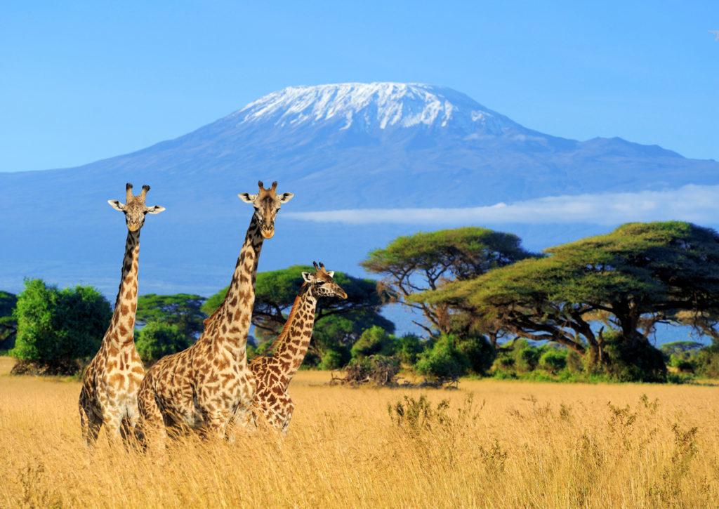 Kenia Retourtickets
