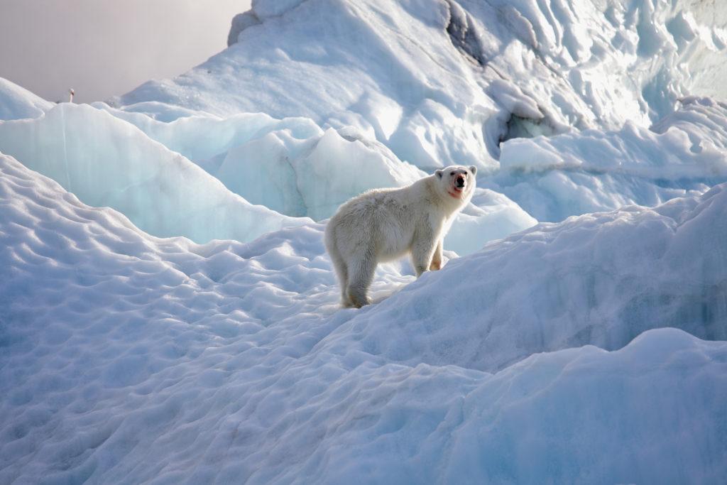 Retourtickets naar Spitsbergen