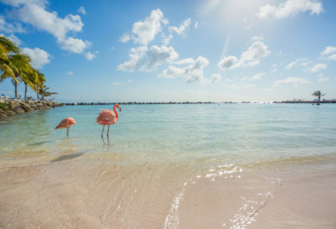 Vakanties, Vakantie, Caribbean,