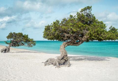 Deals, Vakantie, Caribbean, Aruba + Antillen